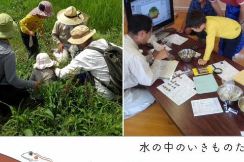 【June/July】Wildlife Picnic at Suzume Farm! Let's Observe Tiny Creatures Living Inside Rice Fields!