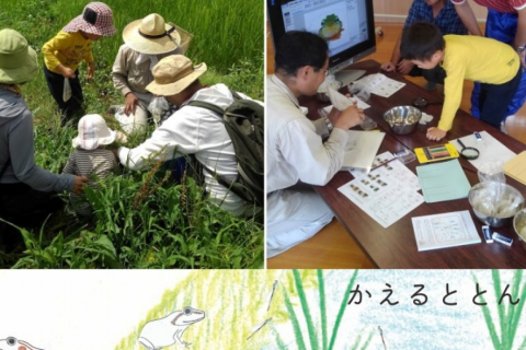 【July/August】Wildlife Picnic at Suzume Farm! Let's Observe Frogs, Fish, and Water Insects Inside Rice Fields!