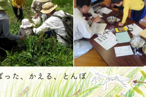 【September/October】Wildlife Picnic at Suzume Farm! Let's Collect Insects Around Rice Fields!