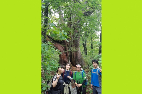 "Hiking to Mt. Kurikoma's ""Millennium Kurobe"" Tree"